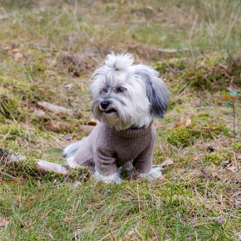 hundepullover-alpaka-wolle-beige-fellblick-1