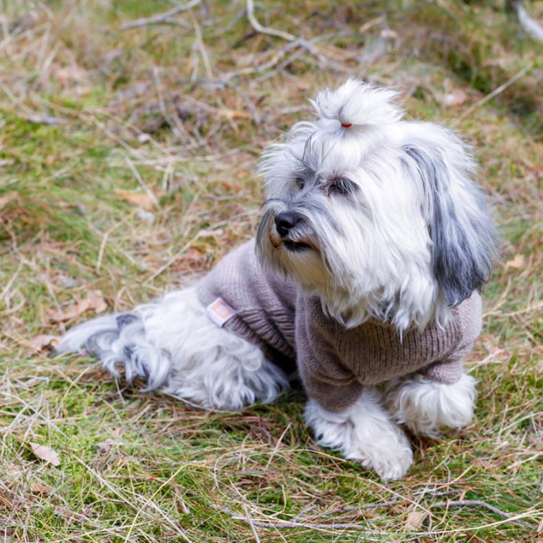 hundepullover-alpaka-wolle-beige-fellblick-2