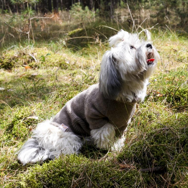 hundepullover-maßgefertigt-Wolle-fellblick6