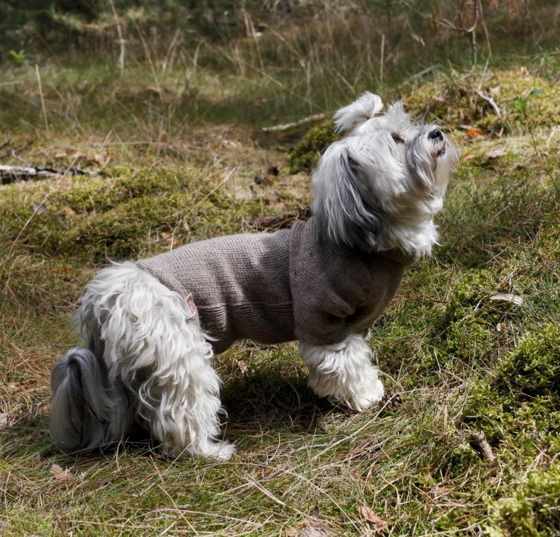 hundepullover-maßgefertigt-Wolle-fellblick8
