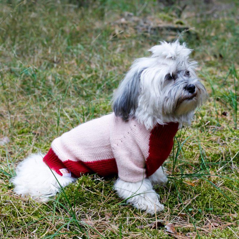 hundepullover alpaka wolle rosa rot fellblick