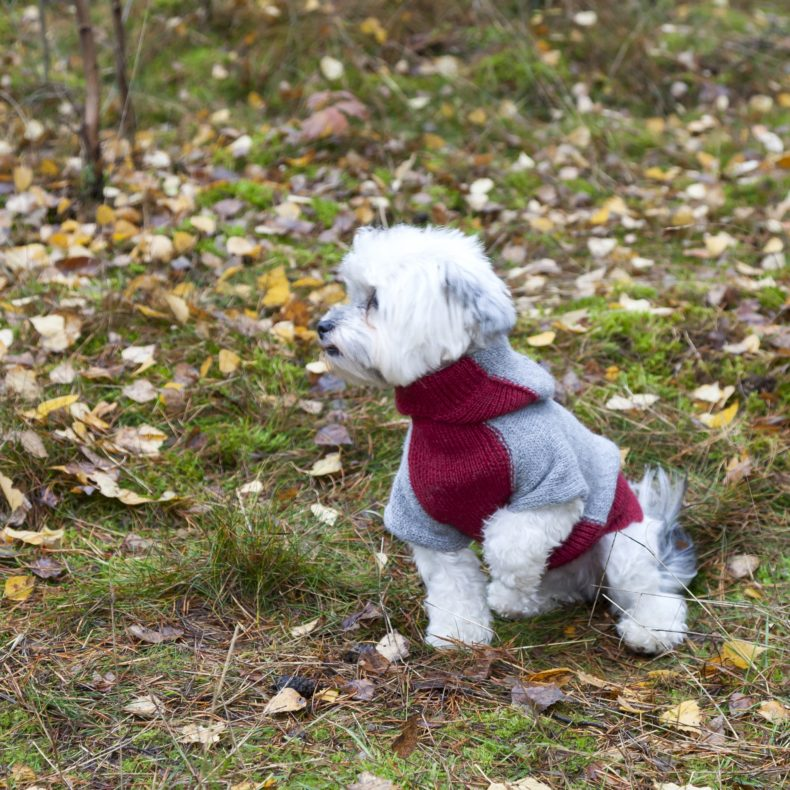 hoodie-hundepullover-alpaka-wolle-dunkelgrau-rot-fellblick-5
