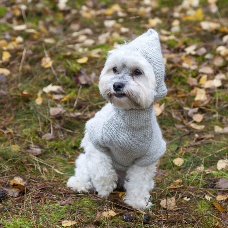hoodie-hundepullover-alpaka-wolle-hellgrau-fellblick-1
